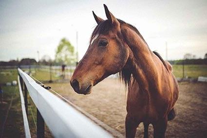 Pferd_im_Gehege _small