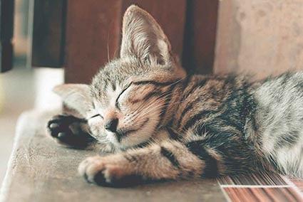 Schlafende_kleine_Katze_small